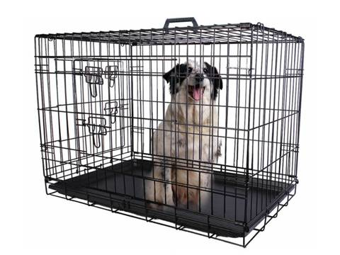 A dog is sitting on the black plastic pan and looking outside in the animal cage.