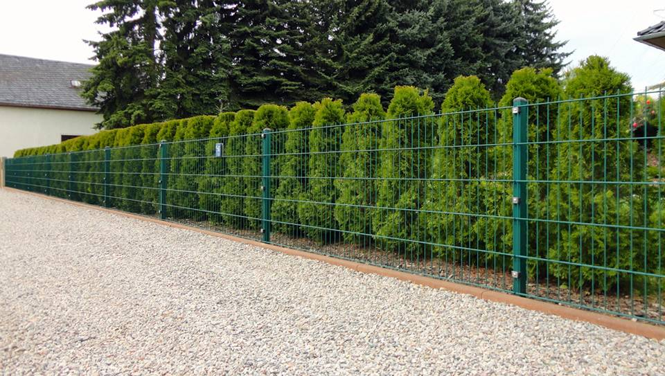 PVC coated welded wire mesh fence is beside a row of pine trees in a park.