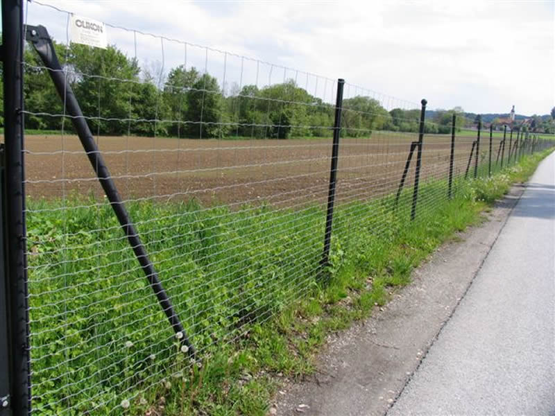 A large piece of field is surrounded by welded wire mesh fence.