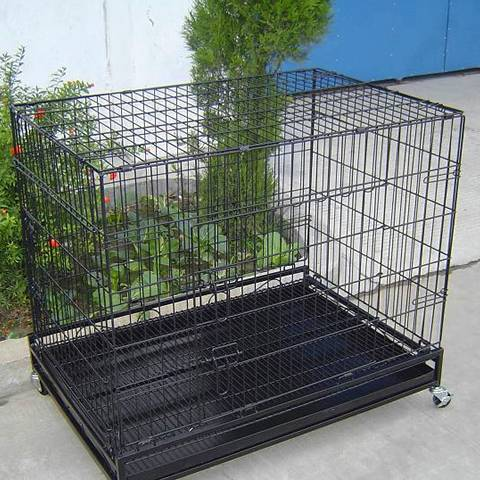 A black welded wire mesh cage with bottom pan and universal wheel beside the green plants.